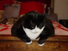 Consejos para que su mascota pierda peso