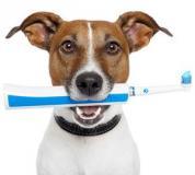 Consejos para el cepillado dental