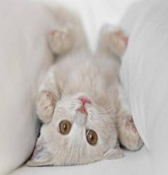 Esterilización en los gatos