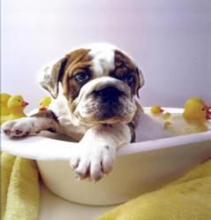 Peluquería canina Clínica Mundo Vivo - Bertamiráns - Ames